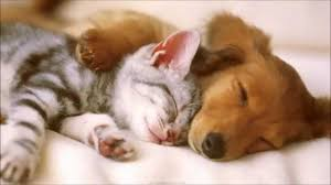 cute and funny pet video of dogs cats kittens puppies full