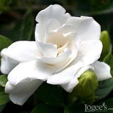 Most Fragrant Plants Best Smelling Houseplants Diy Network Blog Made Remade Diy