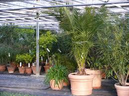 balkon grã npflanzen balkonpflanzen überwintern so überwintern sie ihre pflanzen richtig