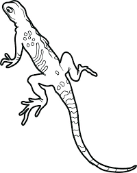 desert lizard coloring page newt coloring page lizard coloring page newt coloring pages desert