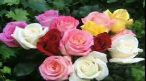 Beautiful Flower Pictures Beautiful Flowers Youtube