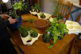 growing vegetable indoors made easy indoor plants expert
