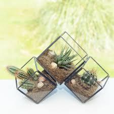 clustered three cube succulent cactus terrarium
