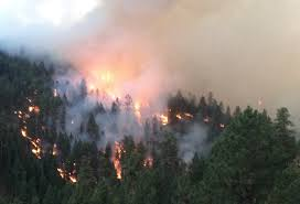 Wildfire Shot Drink by Burned Poor Planning And Tactical Errors Fueled A Wildfire
