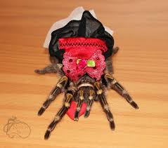 93 best they re tarantulas images on spiders