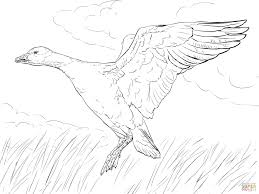 goose coloring page goose with ribbon printable animal coloring
