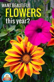 50 best beat your neighbor fertilizer images on pinterest flower