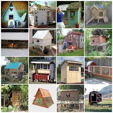 backyards splendid backyard chicken coops for sale a perfect mix