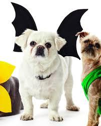 bat wings harness costume martha stewart