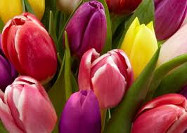 Flower Delivery Syracuse Ny - about us and business hours fr brice florist syracuse ny 13206