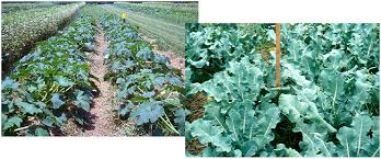 what is u201corganic no till u201d and is it practical extension