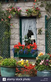 flowers in hanging baskets window box large pots and trellis stock
