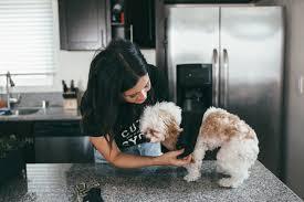 punk rock puppy diy dog shirt revenge bakery