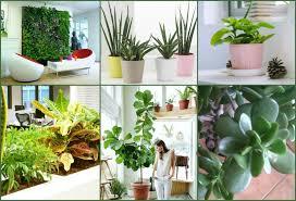 plantes bureau les plantes au bureau se mettre au vert au travail hub grade