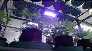 commercial led grow lights grow lights green house lights max luminaires usa
