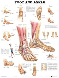Foot Pain Map Anatomy Of Hands Gallery Learn Human Anatomy Image