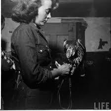 afghan hound art emporium saluki and jer falcon sharing a kill longdog lurcher and