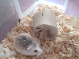 226 best hamsters images on pinterest animals baby hamster and