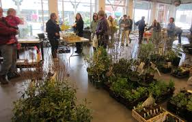 where to buy native plants spring is coming order ct native plants and support local