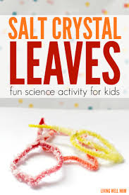 thanksgiving science activities salt crystal leaves fall stem activity for kids