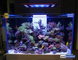 Aquascaping Competition The Beautiful Entries Of This Year U0027s Aquarama Reef Aquascaping