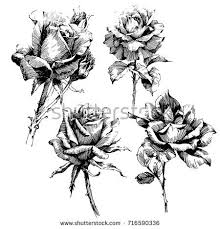 design flower rose drawing wild flowers roses isolated black ink stock vector hd royalty free