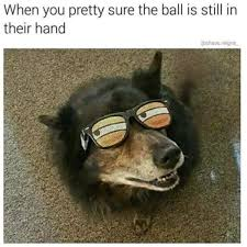 Dog With Glasses Meme - funny and adorable dog memes thechive