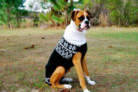 boxer dog xmas 13 dog sweaters to keep your best friend warm this winter