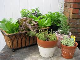 outdoor and patio brown container gardening vegetables mixed with