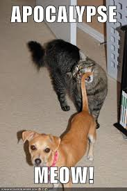 Dog Cat Meme - dog about to bite cat s tail justpost virtually entertaining