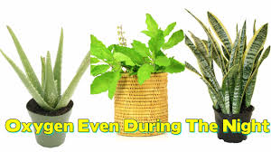 9 plants which give out oxygen even during the night youtube