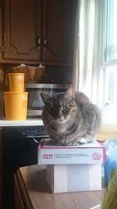 feline rescue cat tales