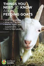 what do goats eat and everything else about feeding goats