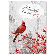 winterberry cardinal cards current catalog