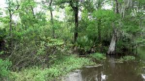 Louisiana travel videos images Akaka falls footage forest hawaii green waterfall nature water jpg