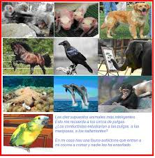 conductismo animal piensan los animales nisamarymati s blog