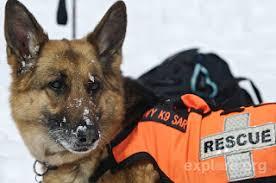 serena parker afghan hound judge fun animals wiki videos pictures stories september 2012
