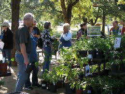 native plant sales plant sale n central chapter npsot