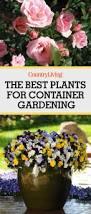 152 best window boxes images on pinterest pots plants and