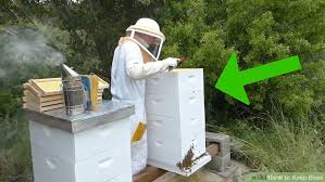Raising Bees In Backyard by 3 Ways To Keep Bees Wikihow