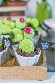 13 best cactusmania images on pinterest gardening cacti and