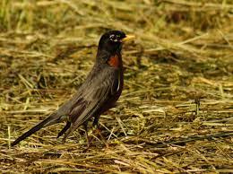 listbirds butler u0027s birds pennsylvania penny birds