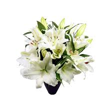 Lily Bouquet Deluxe White Lily Bouquet Free Uk Delivery Post A Rose Flowers