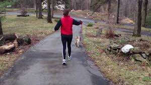 australian shepherd jogging update on how to train your dog to stop barking