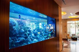 Lovely Fish Aquarium Design Ideas Interior Simple Wall Incredibly - Home aquarium designs
