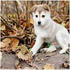 imagenes de animales whatsapp imágenes de perritos con frases cortas bonitas para whatsapp