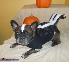 Funny Halloween Costumes Dogs 203 Diy Costumes Images Costumes Halloween