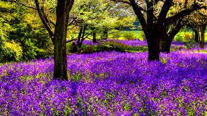 trees flowers wallpaper 984186