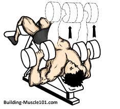 decline bench press muscles decline dumbbell bench press
