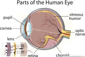 Picture Of Eye Anatomy Human Anatomy Diagram Illustration Description Human Eye Anatomy